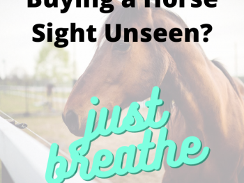 Buying a Horse Sight Unseen