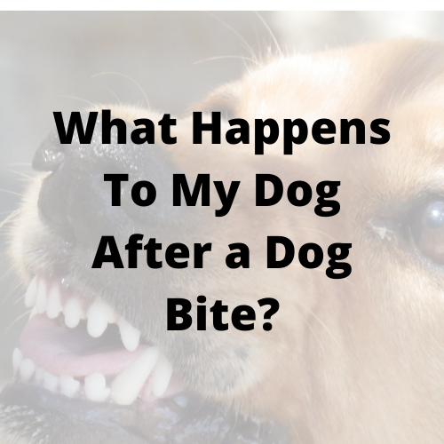 What Happens To My Dog After a Dog Bite